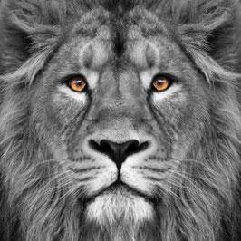 Schilderij le Roi Lion