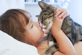 Gesundheit für Katzen