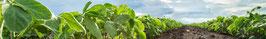 Ertragreiche Pflanzen mit weniger Düngereinsatz - Penergetic p Bentonit