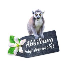 skimmelberg · BIO Honigbusch-Tee · lose, 100 g