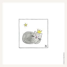Poster 30x30 cm    Katze