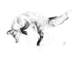 springender Fuchs