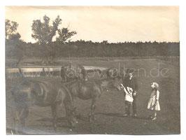 Alte Fotografie Kind streichelt Pferd auf der Weide, um 1910