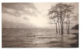 Alte Original Fotografie SONNENUNTERGANG  AUF DER ELBE BEI HOCHWASSER, um 1910
