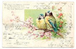 Alte Lithographie Postkarte MEISEN AUF EINEM KIRSCHZWEIG um 1910