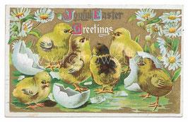 Alte Präge- Postkarte OSTERN Joyful Easter Greetings, Küken schlüpfen aus dem Ei