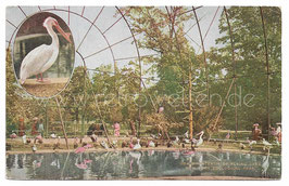 Alte Postkarte NEW YORK CITY Zoological Park  interior of flying cage, um 1910