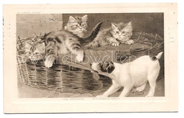 Alte Künstler Postkarte DER STÖRENFRIED Hund ärgert kleine Kätzchen, signiert B. Cobbs, 1909