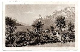 Alte Foto Postkarte LAGO DI GARDA  - ARCO  Park mit Blick auf den Gardasee  1914