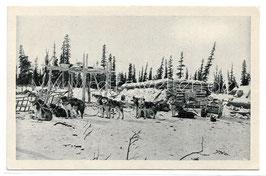 Alte Foto Postkarte ALASKA Schlittenhunde