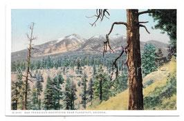 Alte Postkarte ARIZONA  San Francisco Mountains near Flagstaff