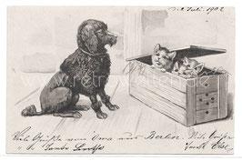 Alte Lithographie Postkarte schwarzer Pudel sitzt vor einer Holzkiste mit kleinen Katzen, 1902