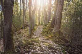 Waldbaden 2021 - Boppard