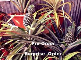 Set regalo Prodotti Kerala: Ananas, Jack frutta, Mango, Pepe