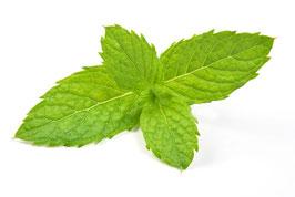 Ätherisches Öl Minze   10 ml  100 % naturrein