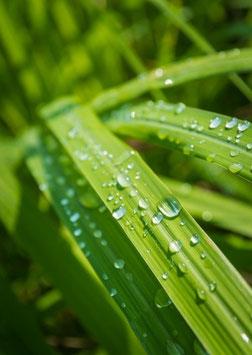 Ätherisches Öl Lemongras 100 ml  100 % naturrein