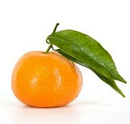 Ätherisches Öl Tangarine  100 ml