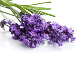 Ätherisches Öl Lavendel Mont Blanc  100 ml 100 % naturrein