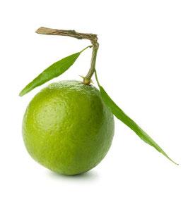 Ätherisches Öl Limette 10 ml  100 % naturrein
