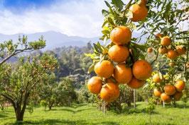Zitrusgarten 10 ml  Ätherische Öle Mischung naturrein
