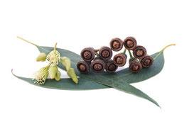 Ätherisches Öl Eukalyptus 100 ml