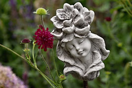 Elfenkopf Seerose