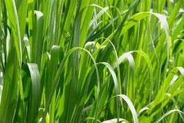 Ätherisches Öl Palmarosa 10 ml  100 % naturrein
