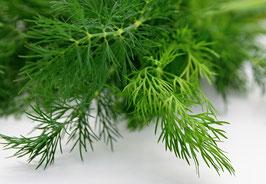 Ätherisches Öl Dillkraut  10 ml  100 % naturrein