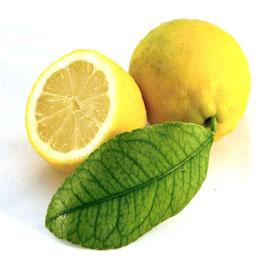 Luftreiniger Zitrusfrische Duftöl 10 ml  Ätherische Öle Mischung naturrein