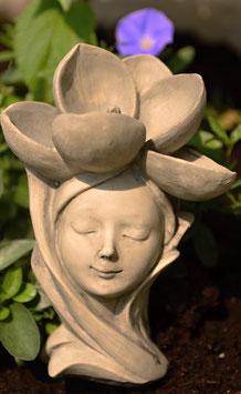 Elfenkopf Magnolie