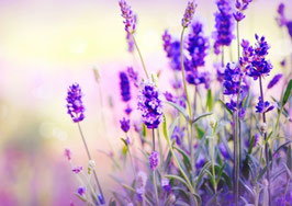 Ätherisches Öl Lavendel Barreme  100 ml