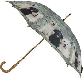 Paraplu Teak Labrador Pups