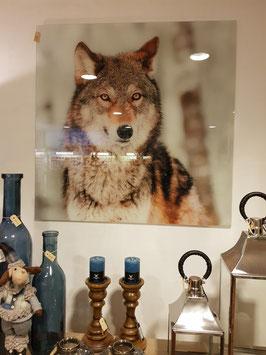 Glazen Foto Wolf