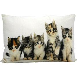 Canvas Kussen Kittens