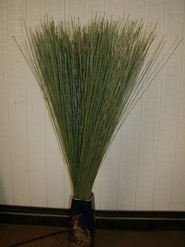 癒し草 【一般のい草】