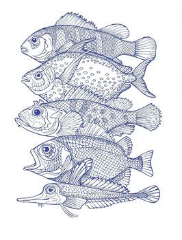 Postkarte Fünf Fische
