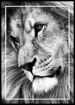 Lion, Poster