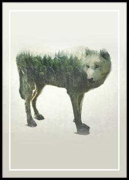 Lupo Bianco, Poster