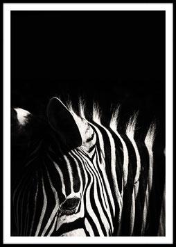 Zebra, Poster