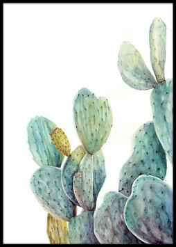 Water Cactus, Poster