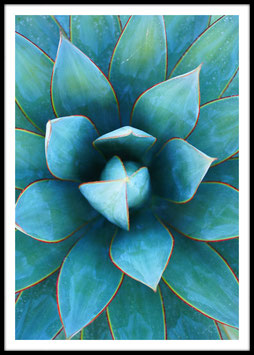 Agave, Poster