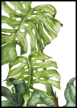 Monstera Illustration, Poster