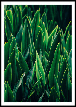 Grass Leaf, Poster