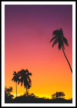 Red Sky Palms, Poster