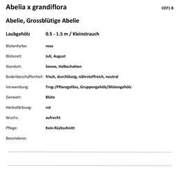 Serie 7.1, 815071 580 Bilder 2./3. Lehrjahr Landschaft (BIVO 2018), Rückseite mit Beschrieb gemäss JardinSuisse, inkl. 4 Ordner