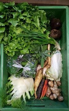 Die Gemüsekiste