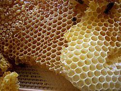Cera d'api Italiana Biologica