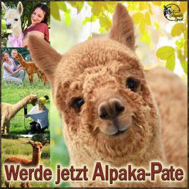 Eine Alpaka-Patenschaft