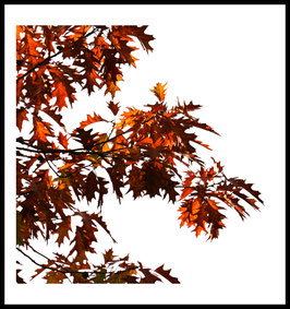 Herbst Rot