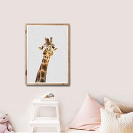 HalliHallo Giraffe